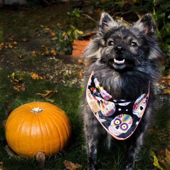 Halloween Verlosung
