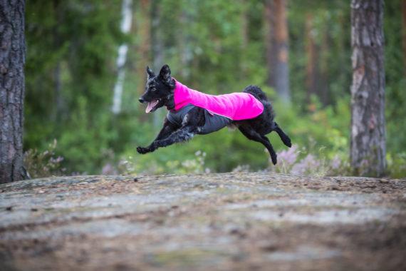 Pomppa, Sipoo 14.8.2019. Photo (c) Jukka Pätynen, Koirakuvat.fi